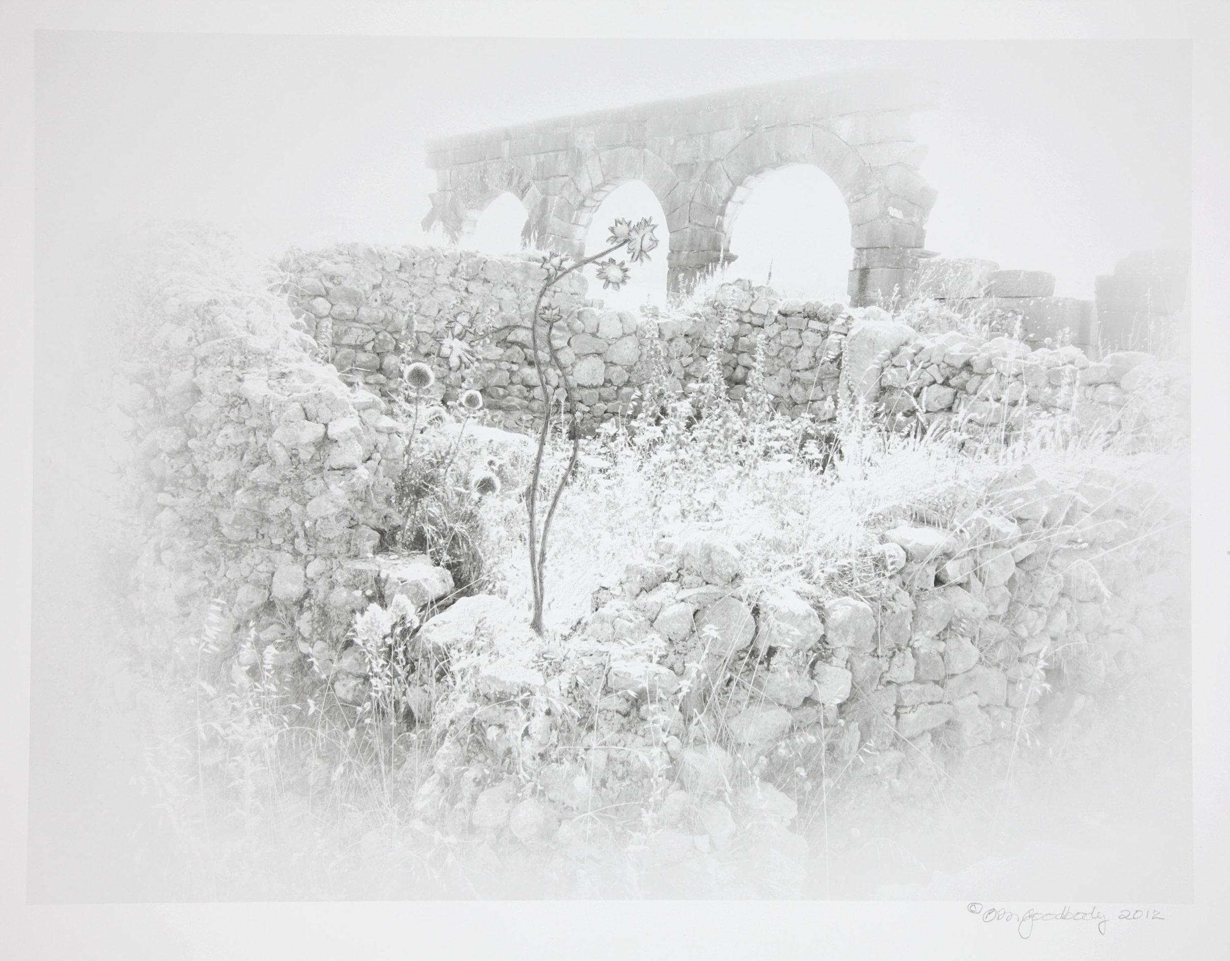 Barbara Goodbody,  Shared Memories  portfolio, 2012, 5/5, Ink jet print, 19.5 x 14 inches