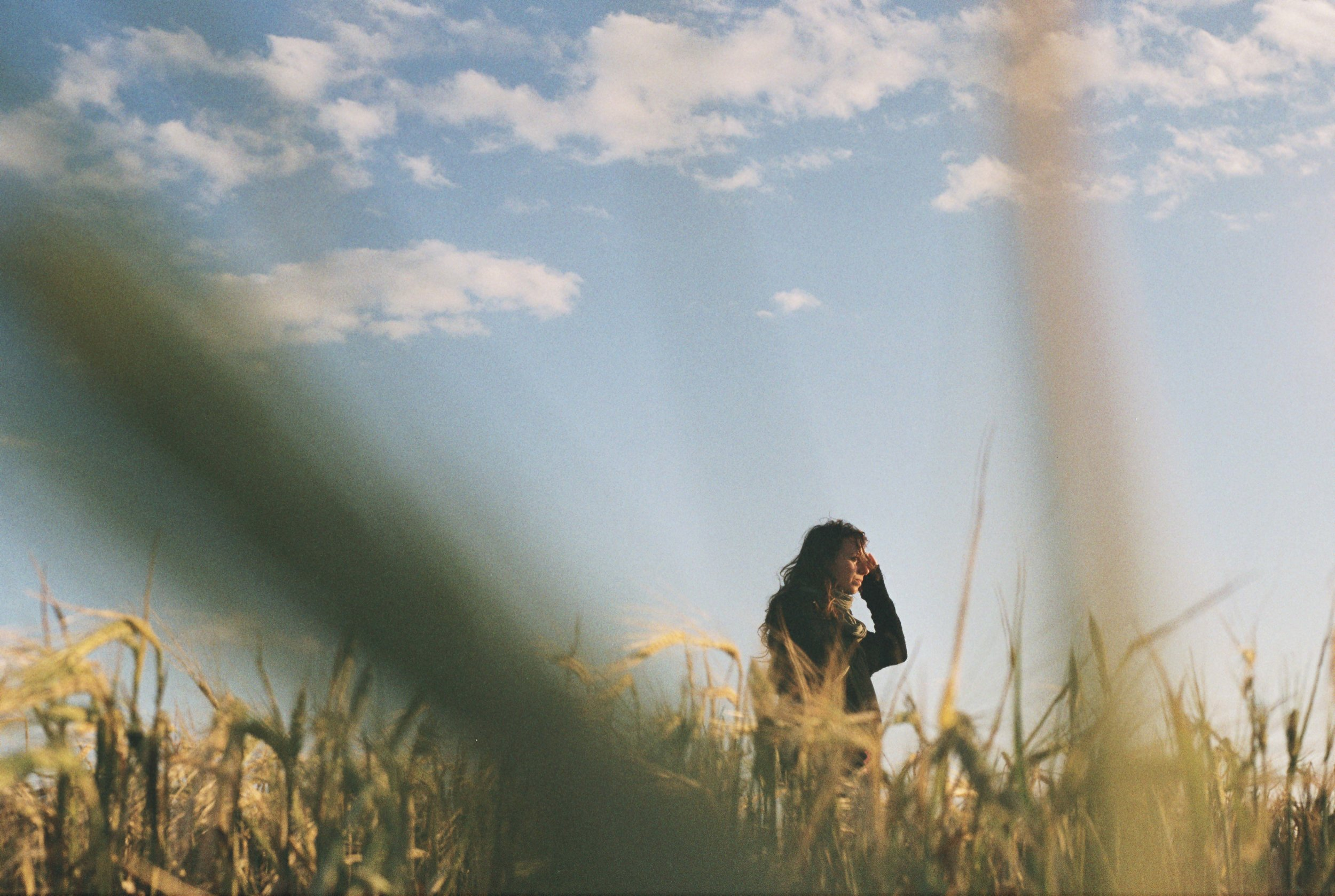 Los campos de trigo del Empordà | Foto: Maria Larreina