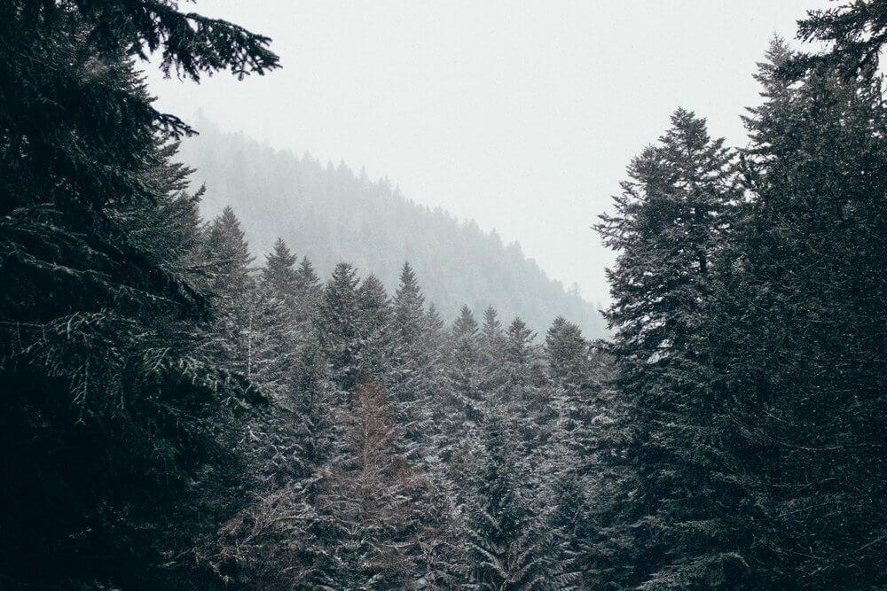Las tonalidades del bosque en los Pirineos | Foto: Adrián Cano