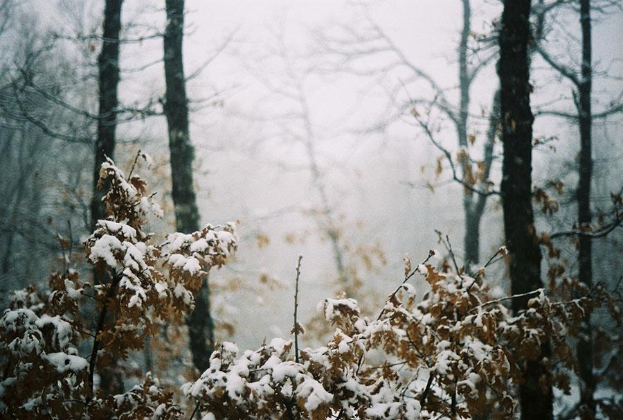 Bosque-nevado.jpeg