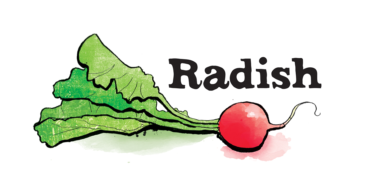 radish illustration, food illustration