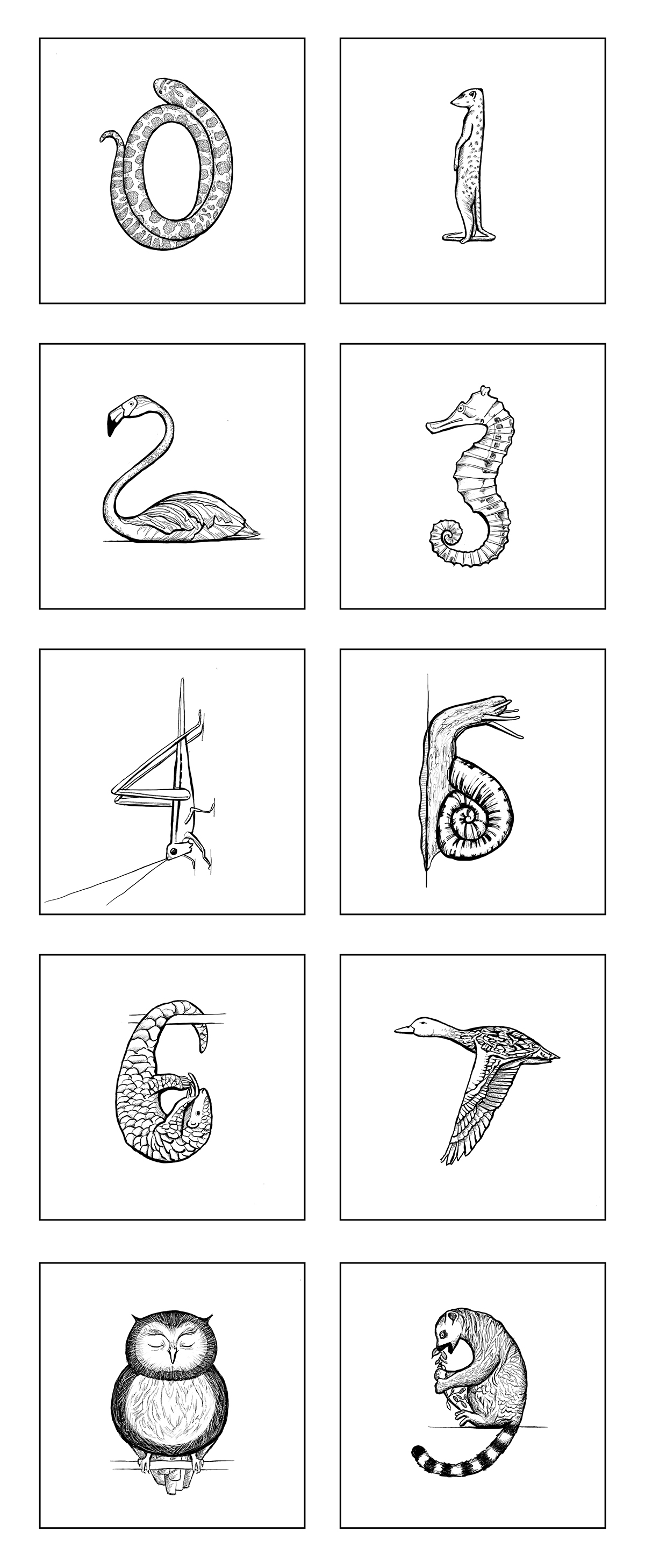 illustrated number concepts
