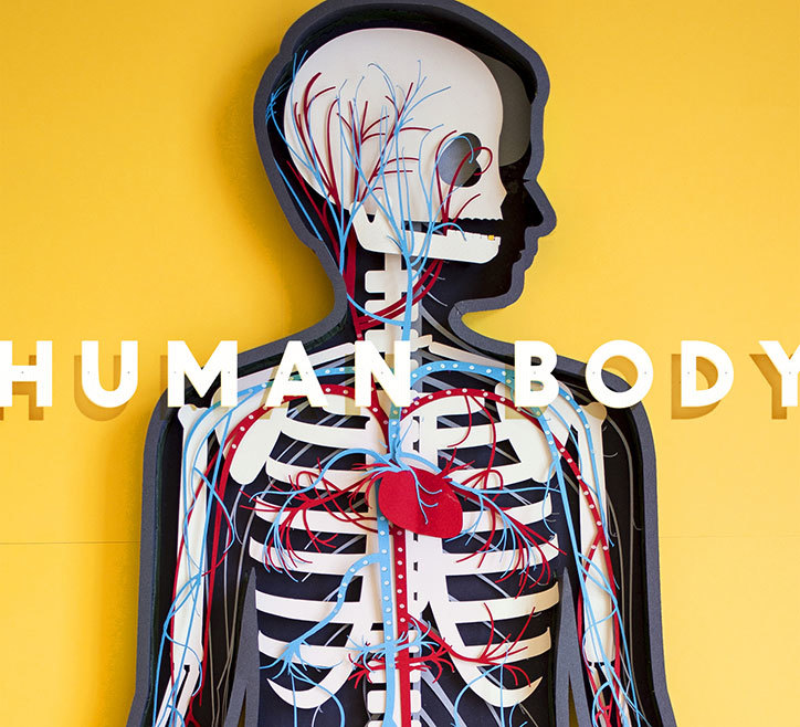 The Human Body app 2013; artwork by Kelli Anderson for Tinybop