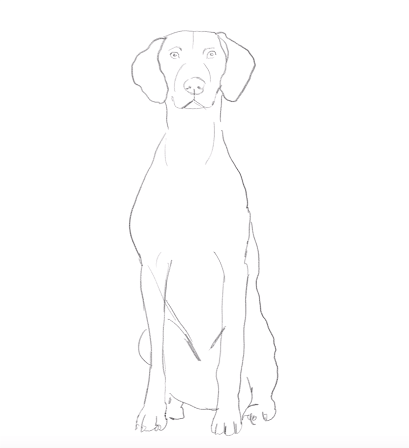 dog illustration.png