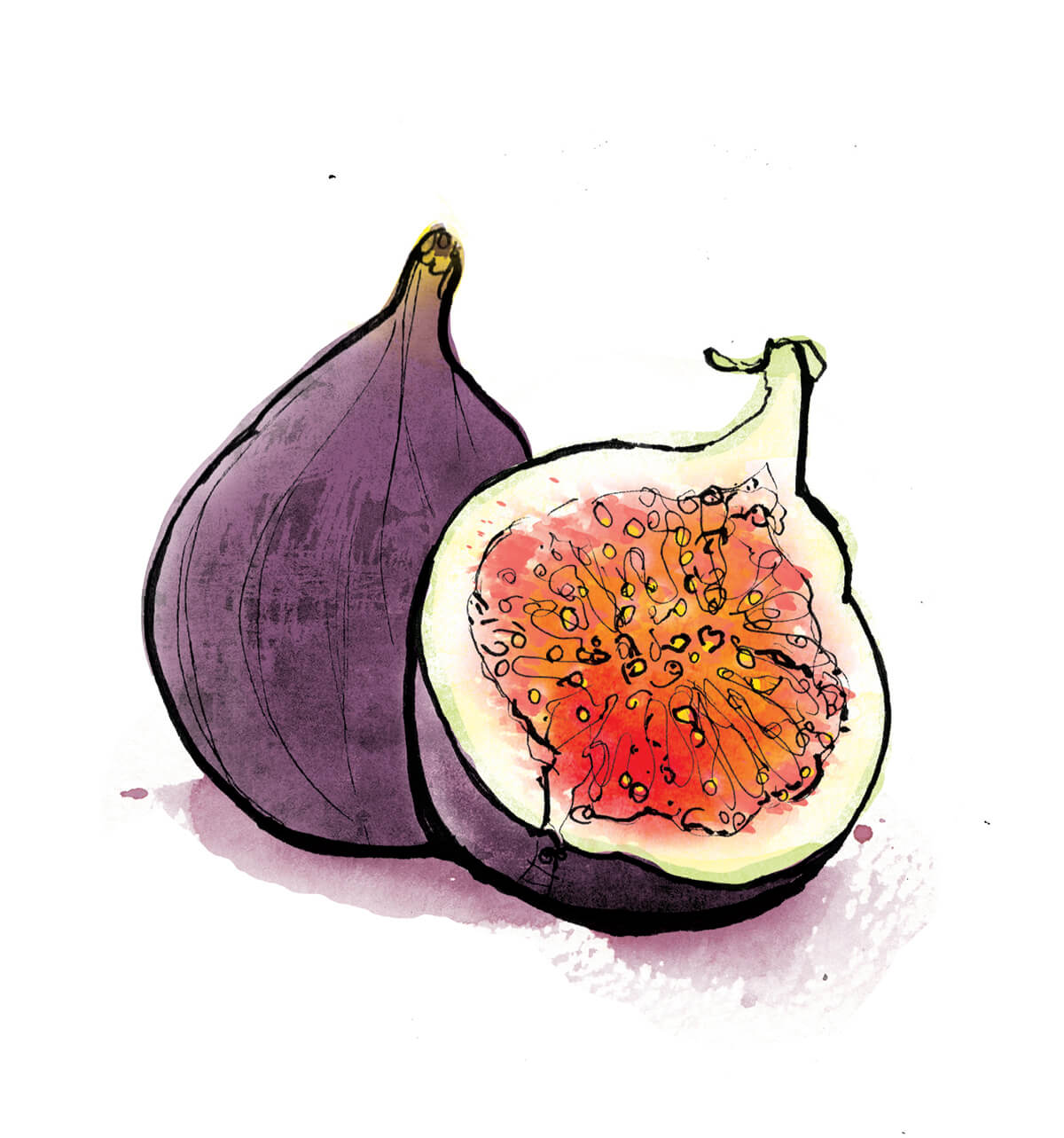 fig illustration
