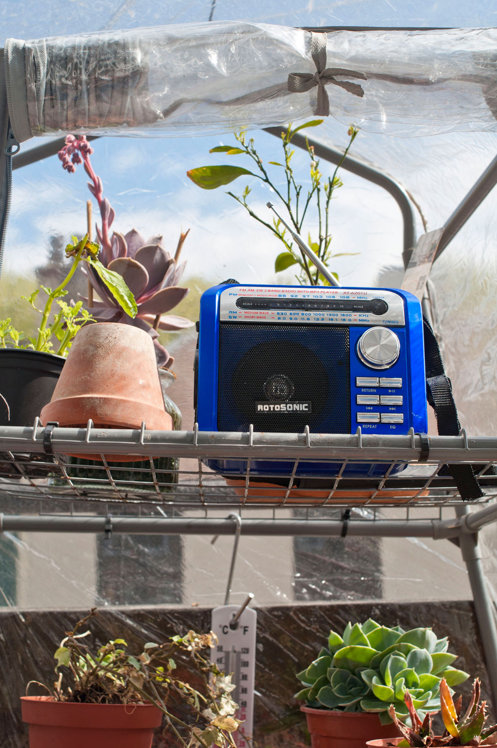My nursery, where I try to rescue my unhappy plants all summer. Photo © Zarina Holmes