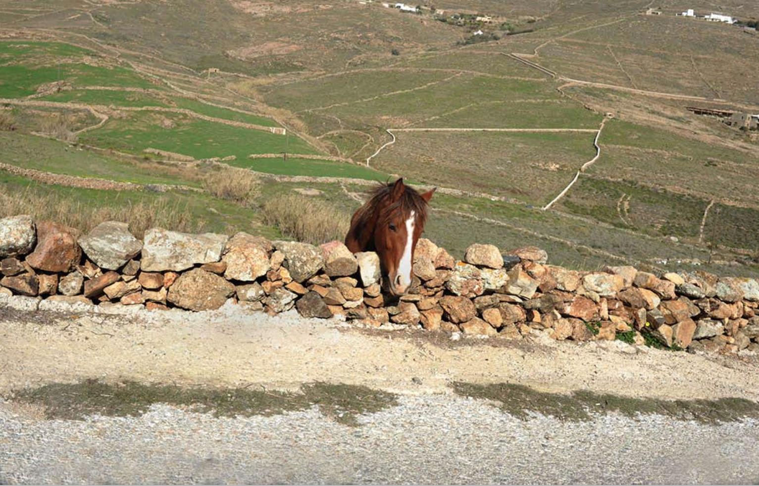 8.Πάρης Πετρίδης_ Μύκονος, 2016 (άλογο)58χ78.jpg