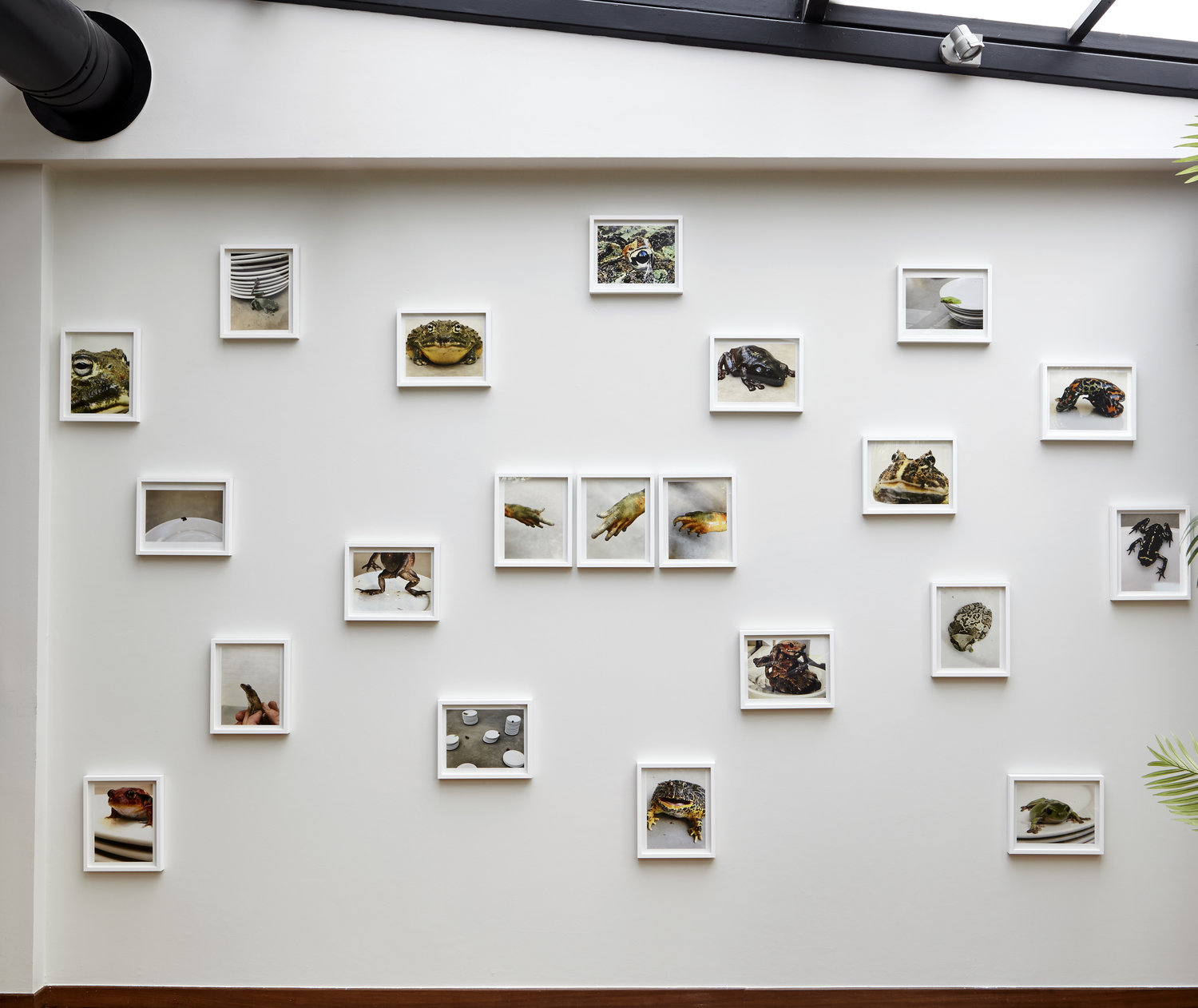 2.DH_Juergen+Teller_Frogs+and+Plates_Installation+view_2017.jpg
