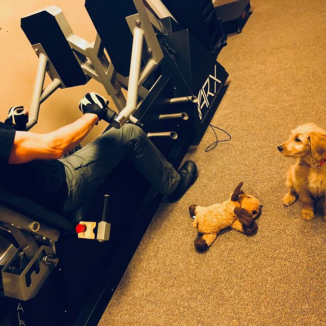 Our therapy dog, Moose is learning the ropes on the ARX ALPHA. He is going to fit right in at Functional Health and Wellness! #therapydog #physicaltherapy #arxfit #arxfitness #strength #strengthtraining #doodle #goldendoodle #goldendoodlesofinstagram  #fxnl #fxnlhealth #doodlelove  #workingdog #workingdogs @arxfit