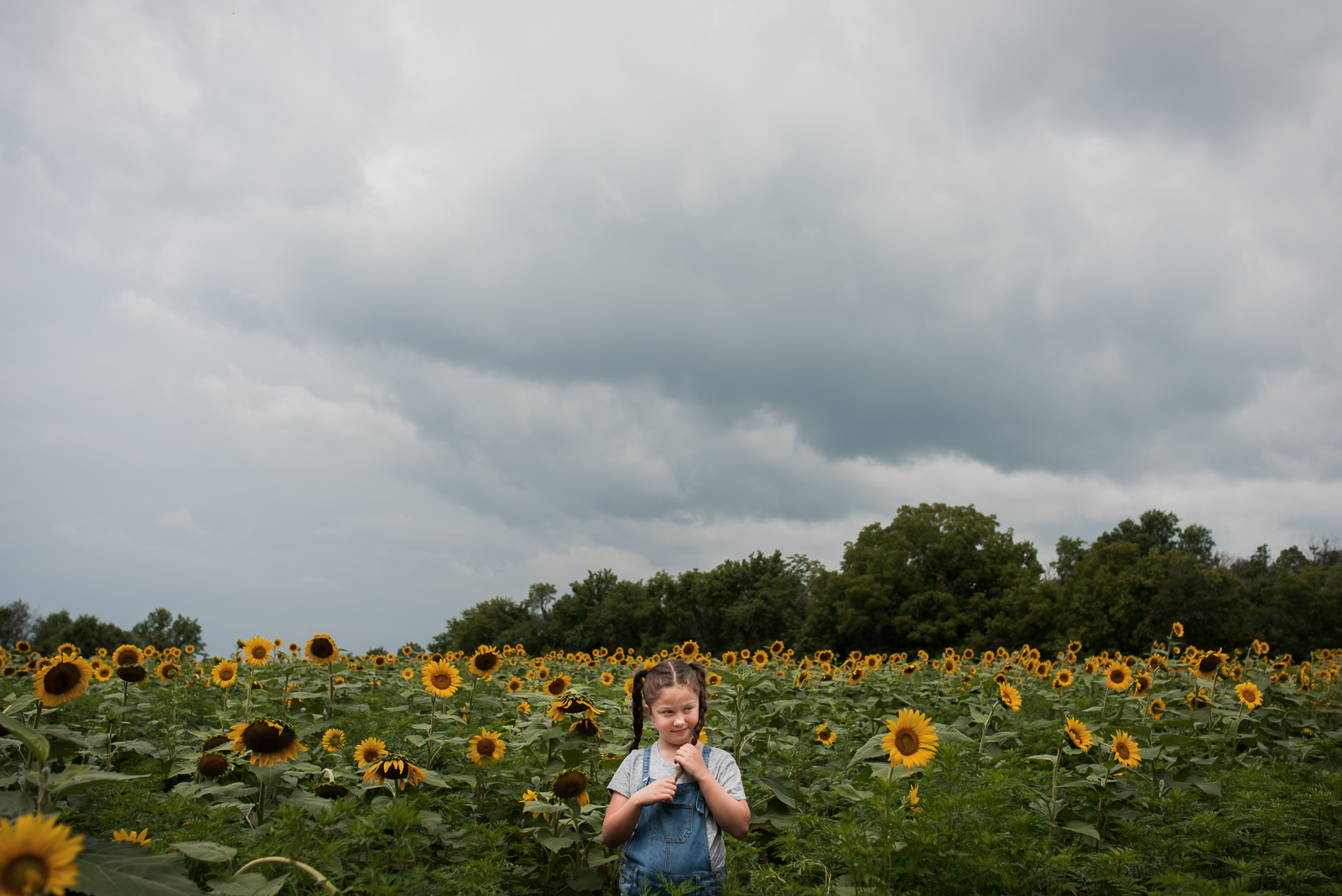 sunflowers-.jpg
