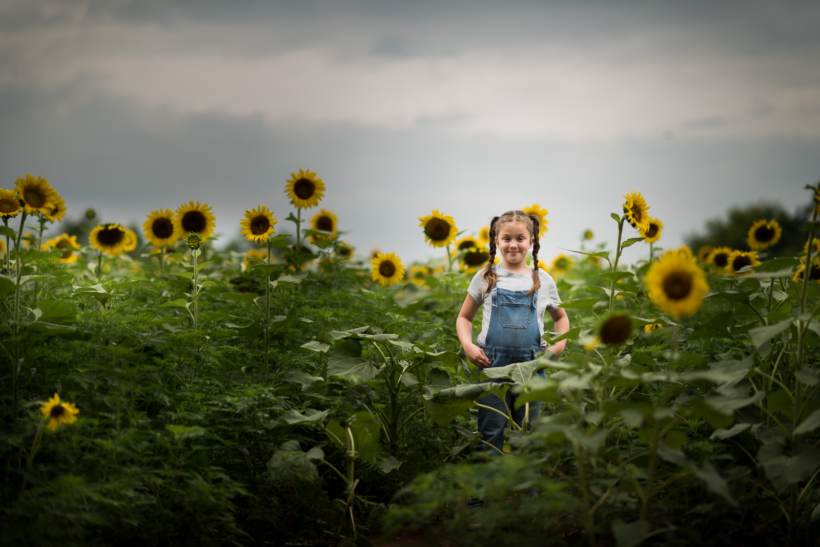 sunflowers-3482.jpg