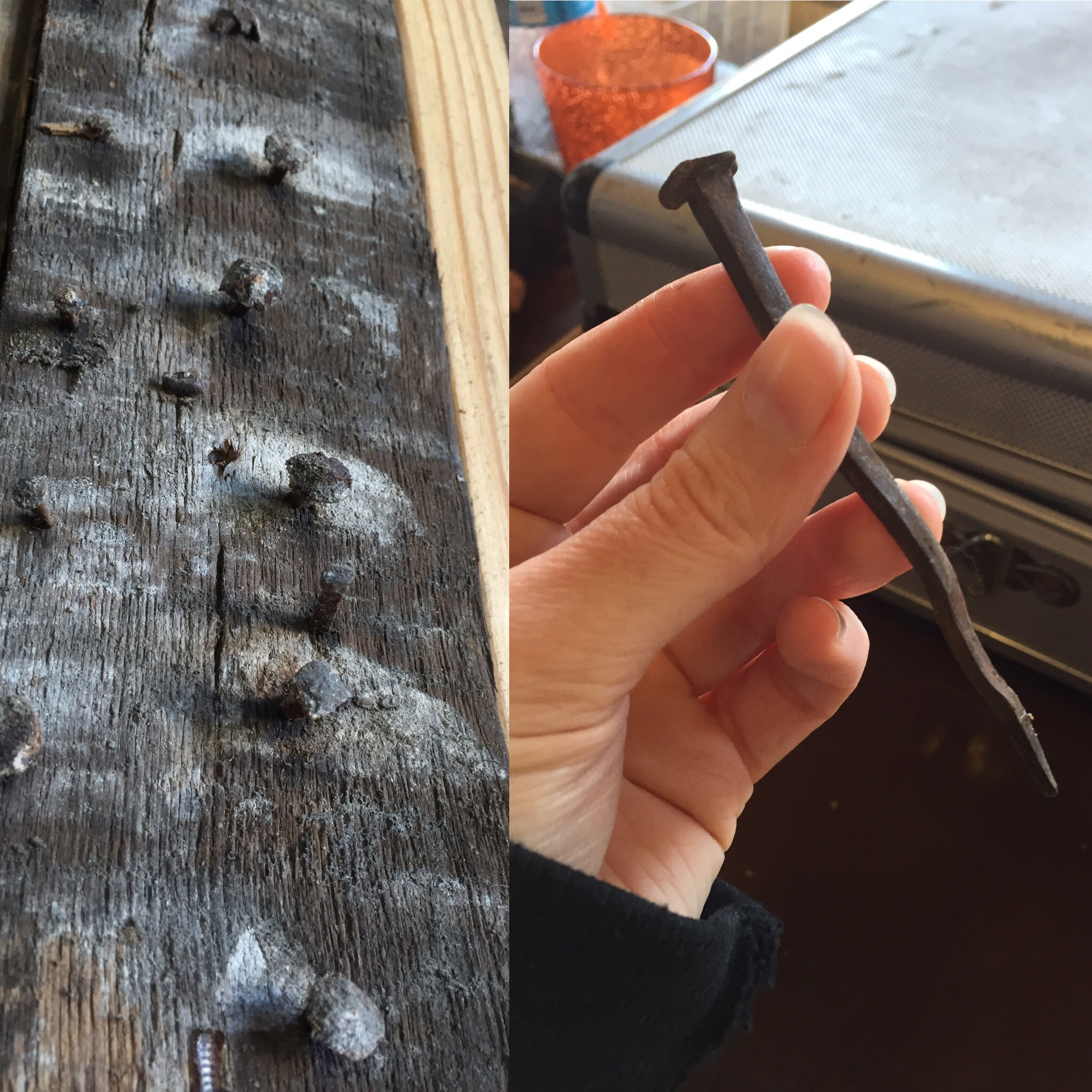 Left: hand-cast iron nails in old wood. Right: Me holding an original nail.