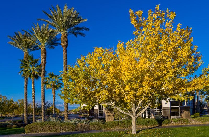 Fall in Las Vegas