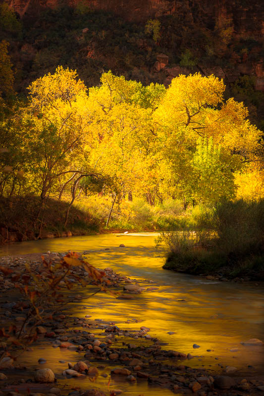 Burst of Color on the Virgin River, Zion National Park