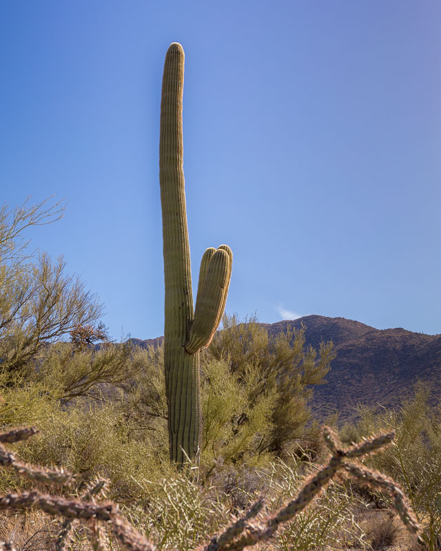 The Fighter, Saguaro National Park