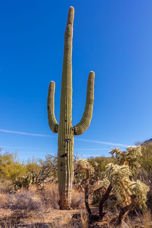 The Hold-Up Victim, Saguaro National Park