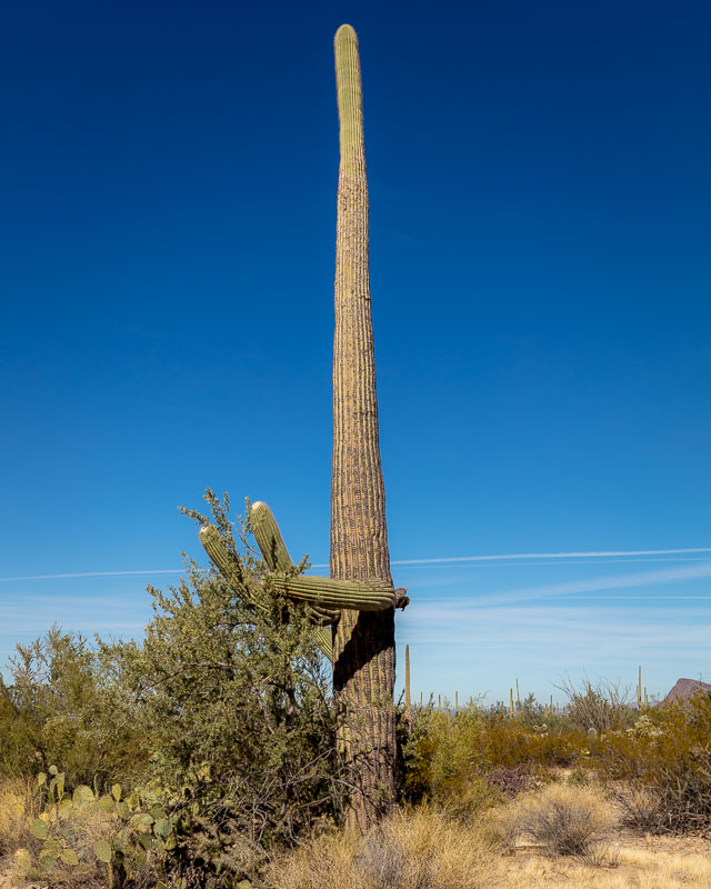 The Surgeon, Saguaro National Park