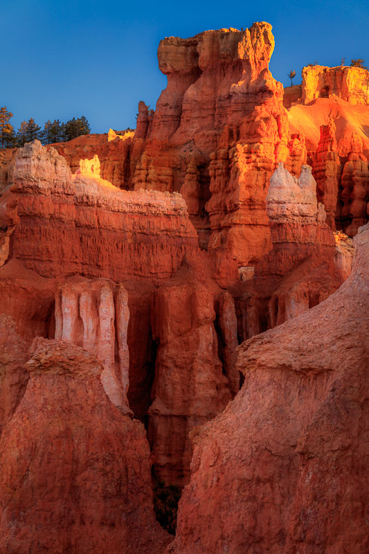 Morning light begins to illuminate the hoodoos, Bryce Canyon National Park