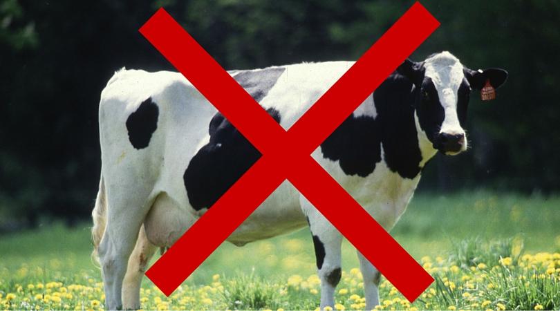 No Dairy