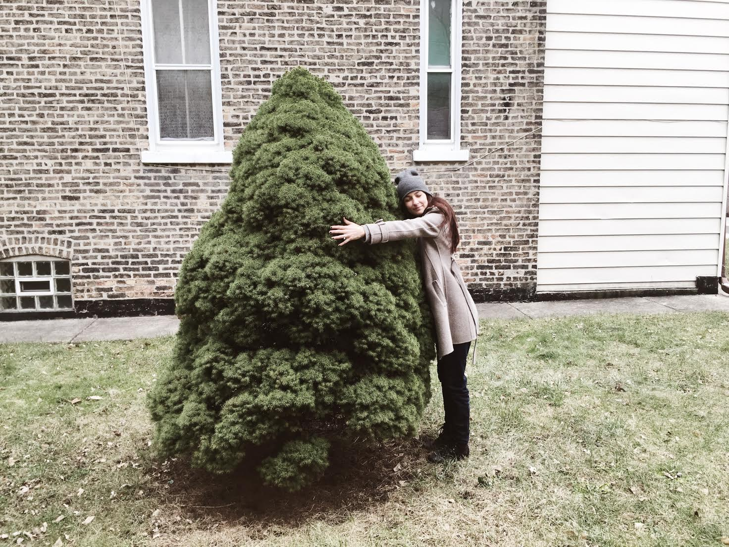 """""""Now you know my love for trees.  @mysocalledtreelife  is another account I post to when I come across a tree I love.""""  