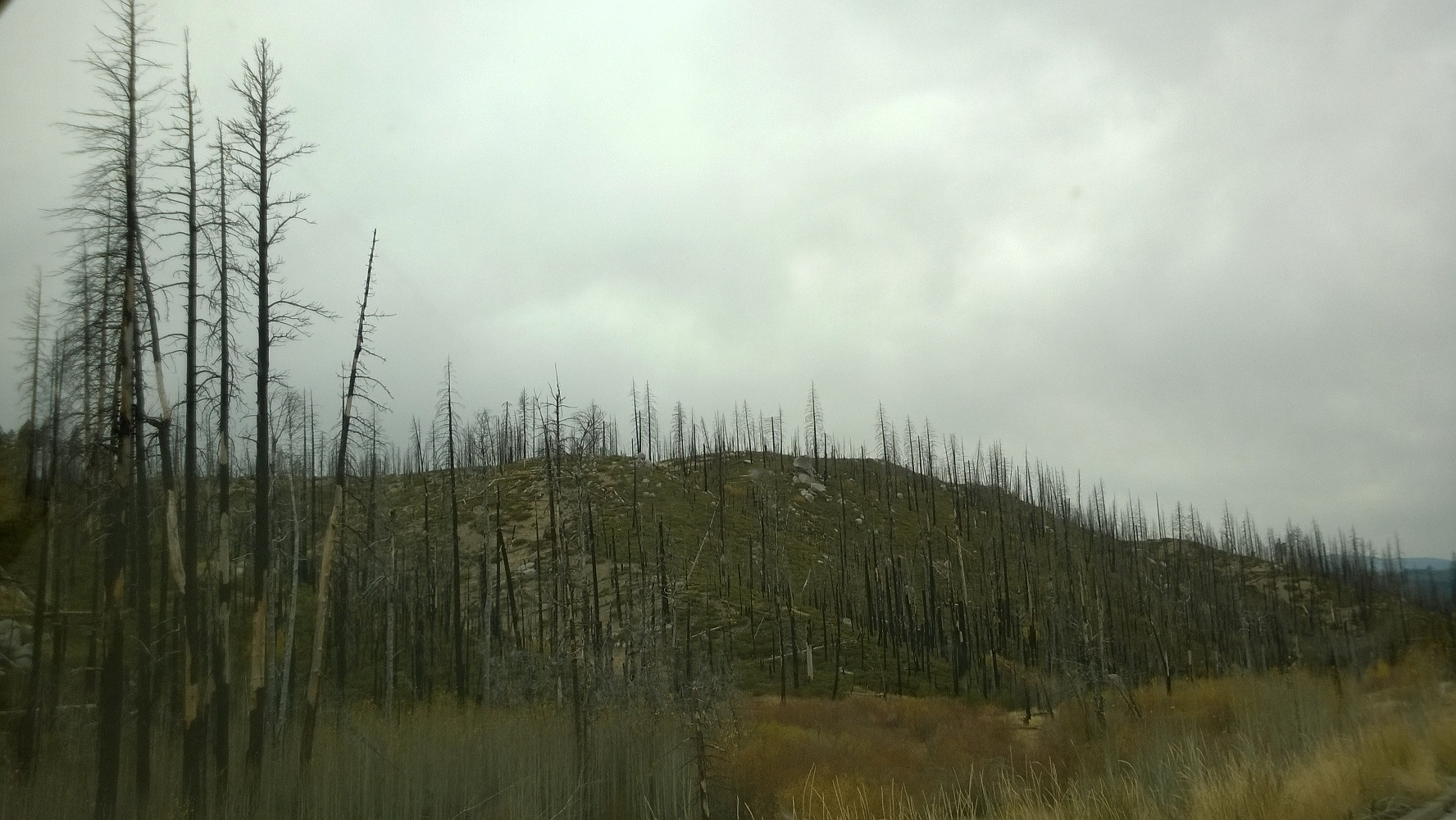 Aftermath of the Moonlights Fire. Today's devastating wildfires, the product of decades of misinformed management centered on fire suppression, not only affect forest health but also in-stream habitat conditions by creating unstable slope conditions and releasing massive amounts of sediment. This can negatively affect trout and other aquatic organisms.
