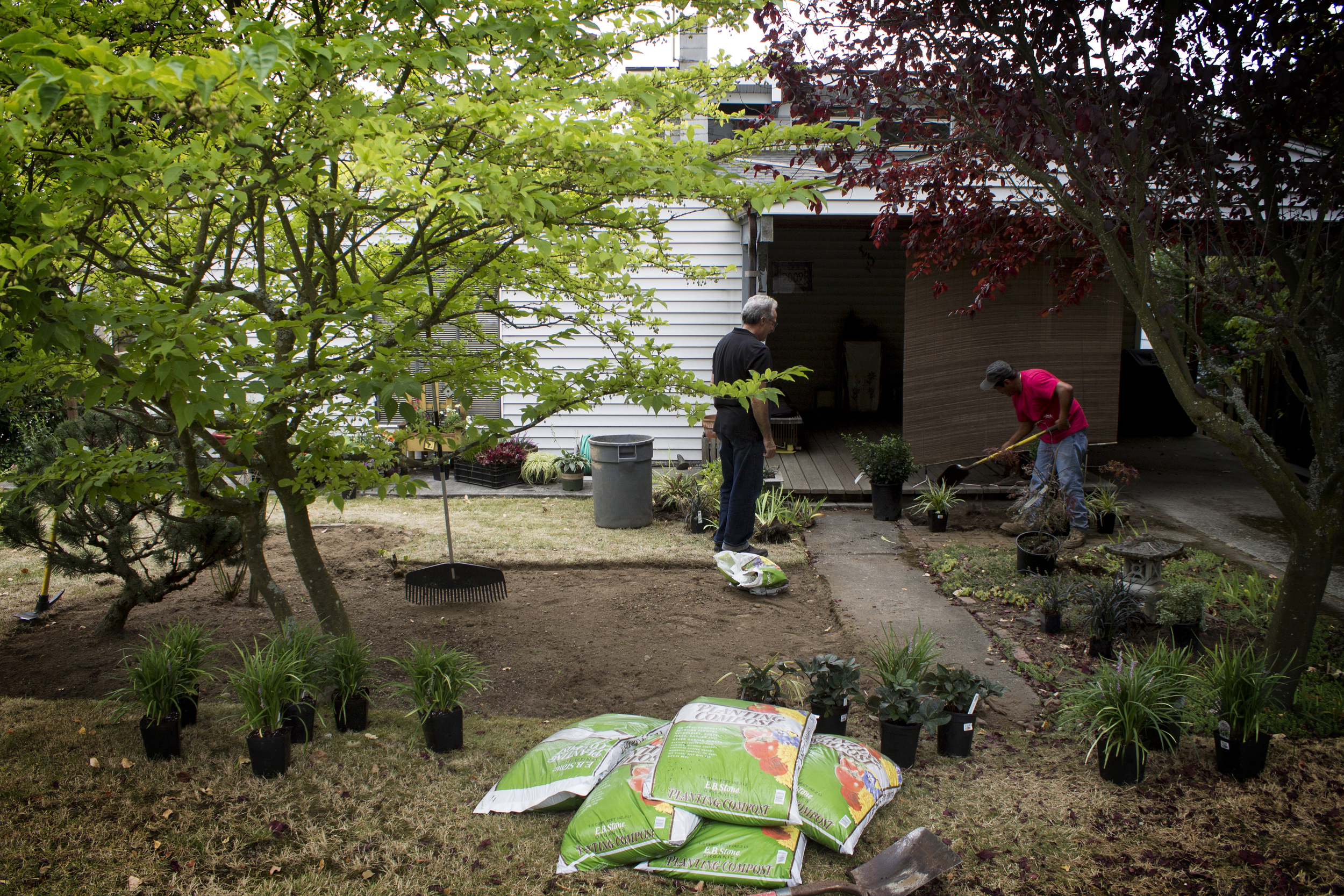 laying out the plants