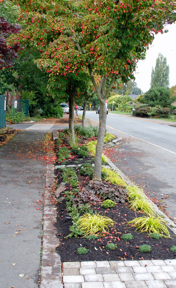 planted parking strip