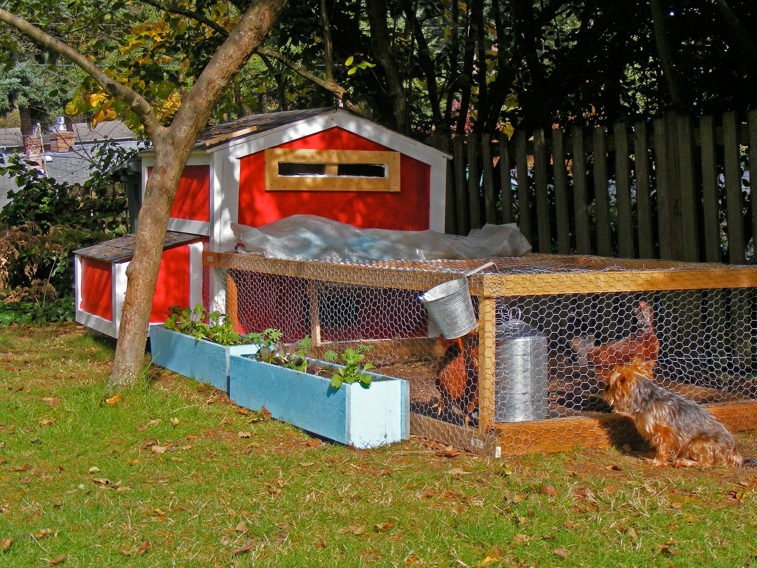 Molly and Chad's Chicken-Coop