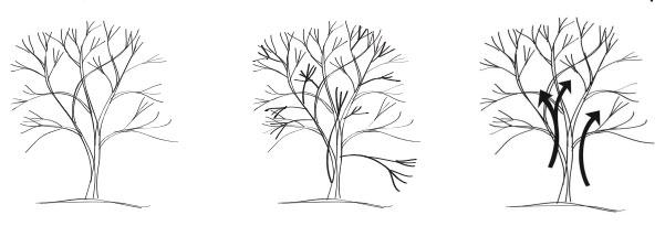 Pruning Ornamental Trees Swansons