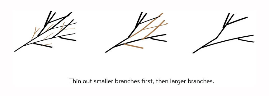 PRUbasics_branches_sm2.jpg