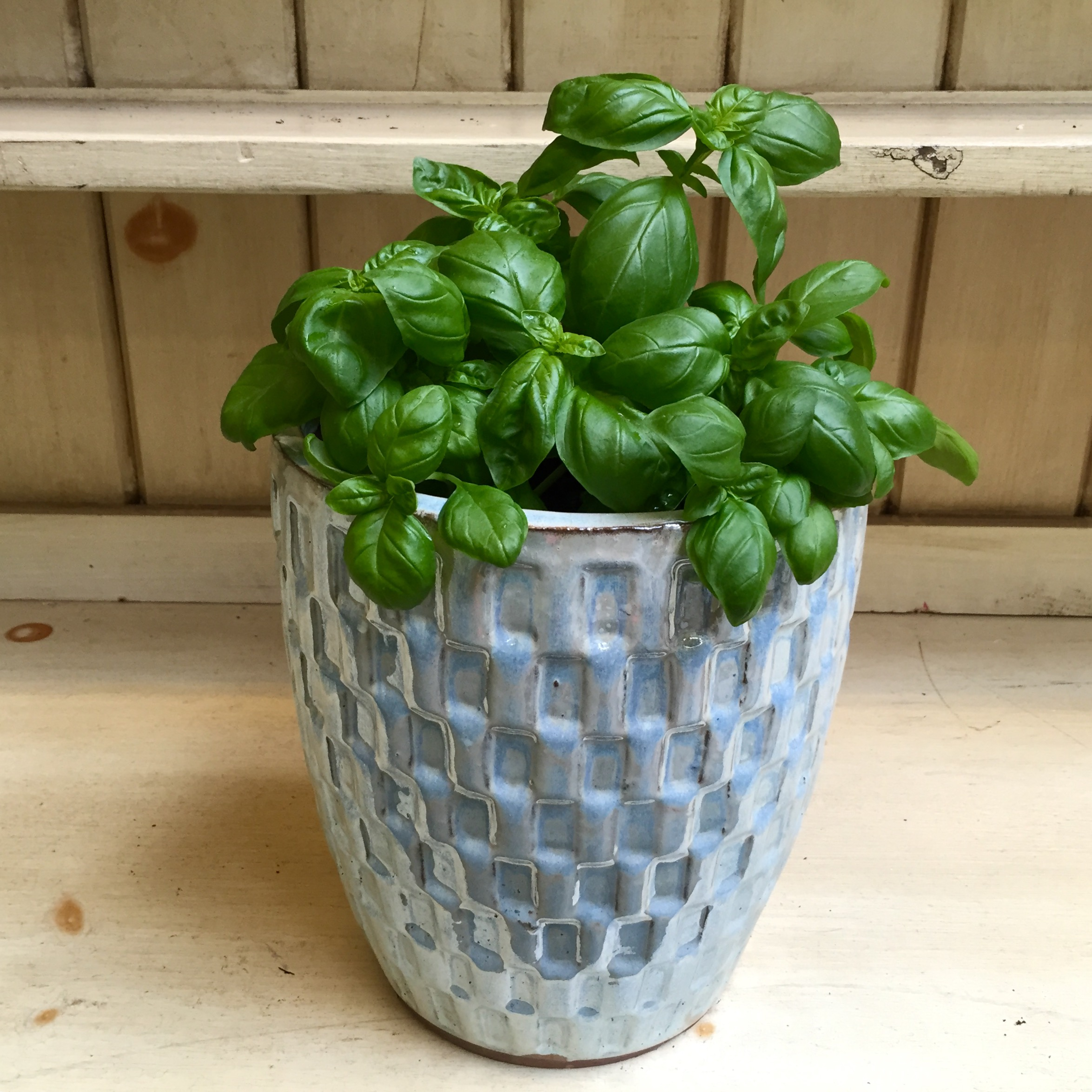 Pictured: Genovese Basil