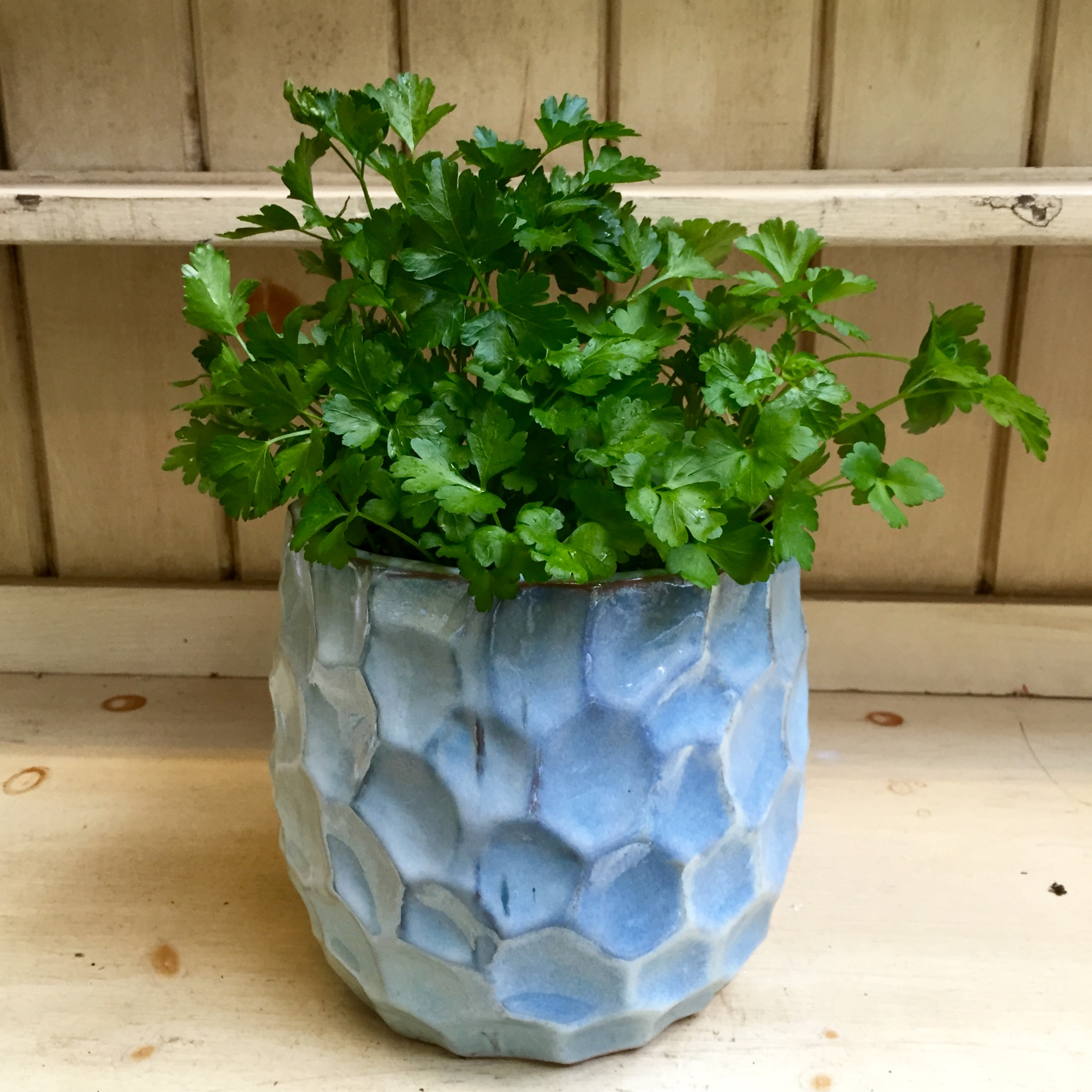 Pictured: Flat Italian Parsley