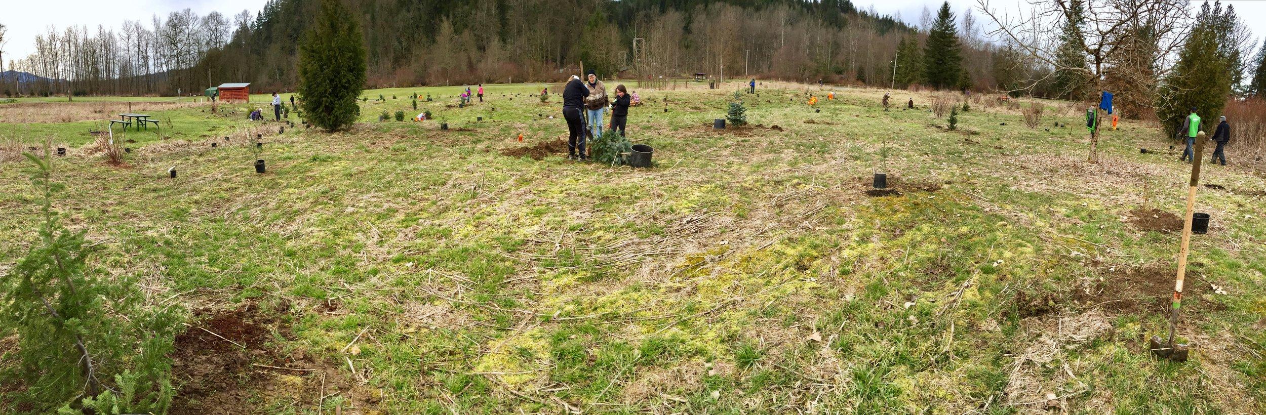 Volunteers planting in Tolt-MacDonald Park