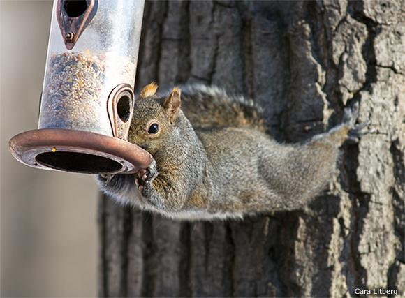 photo: Cara Litberg, National Wildlife Federation