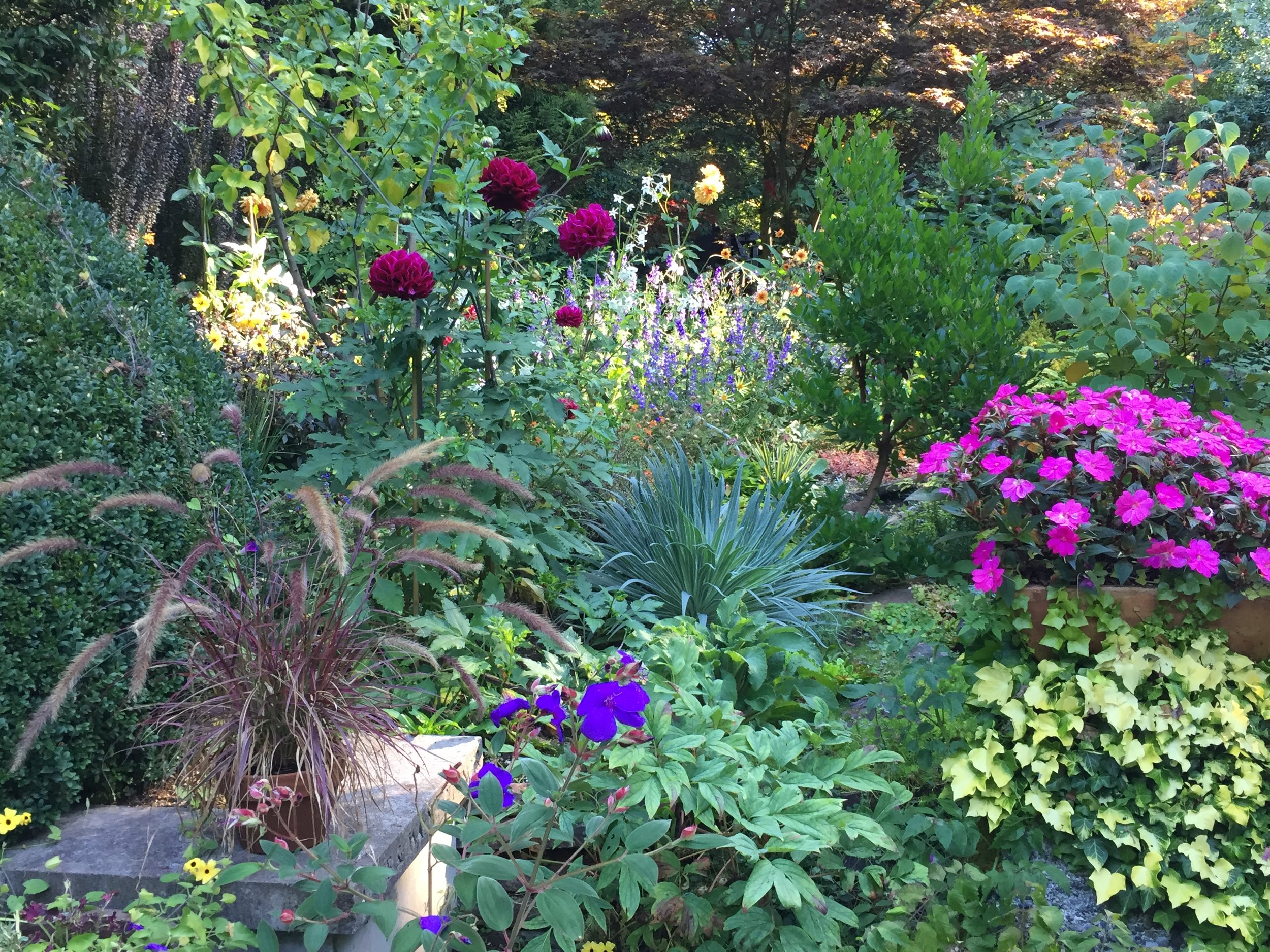 A Bright Mix of Plants