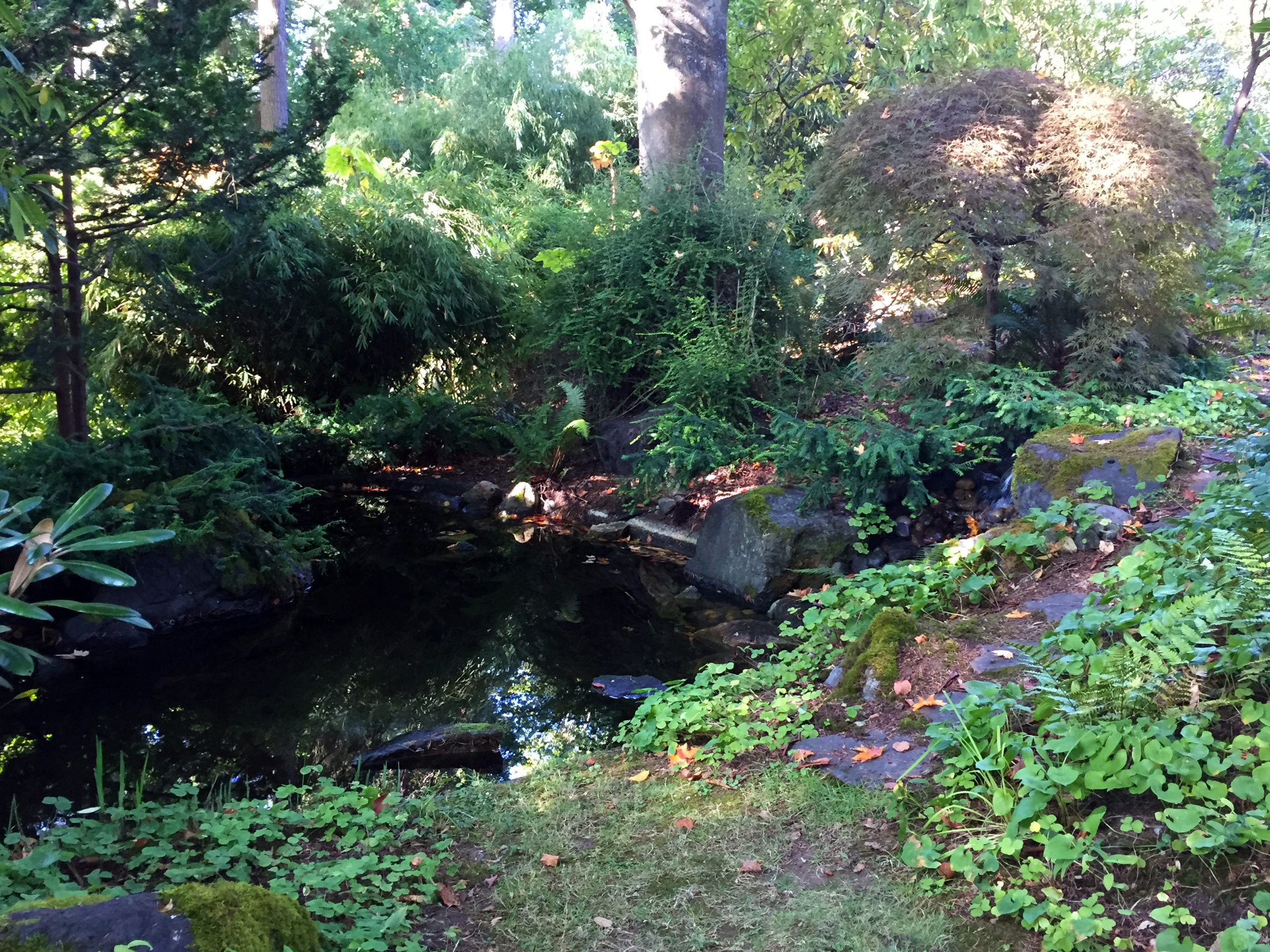 The Pond in the Woodland Garden