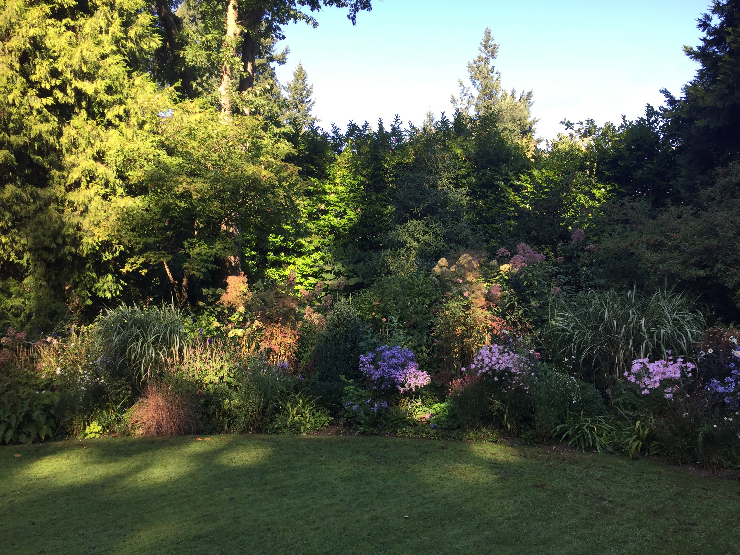 A Mixed Border with Fall Asters