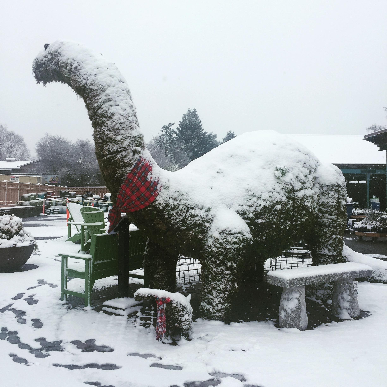 Humphrey in a sudden snowstorm!