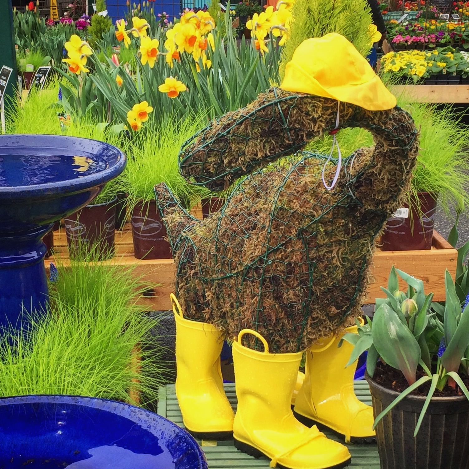 Beatrice the dinosaur in her rain gear