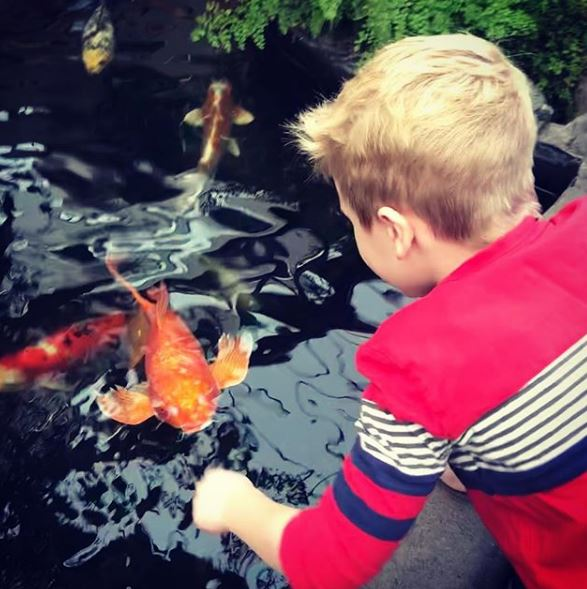 The koi ponds are a year-round attraction*