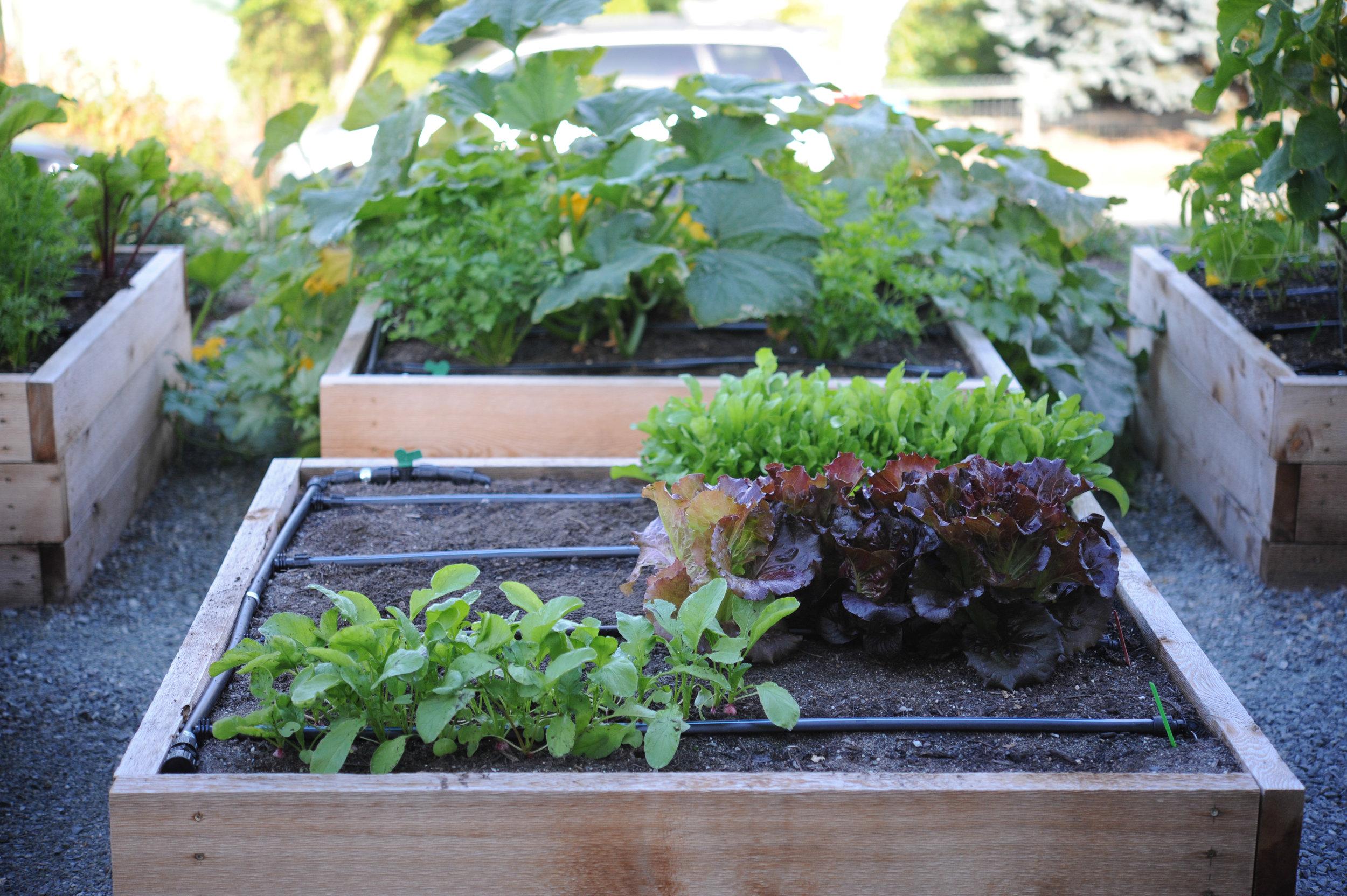 Garden Planning_Crop Lifespan_Hilary Dahl_Seattle Urban Farm Co.jpg
