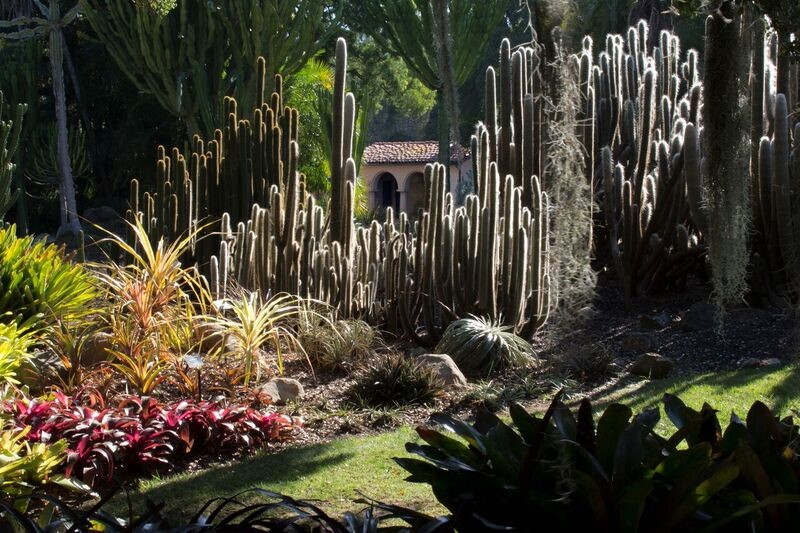Pool House and Cactus.jpg