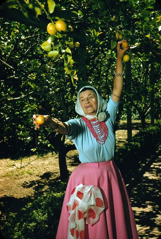 picking oranges.jpg