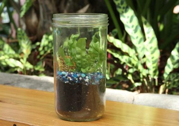 mason jar terrarium enews pic.jpg