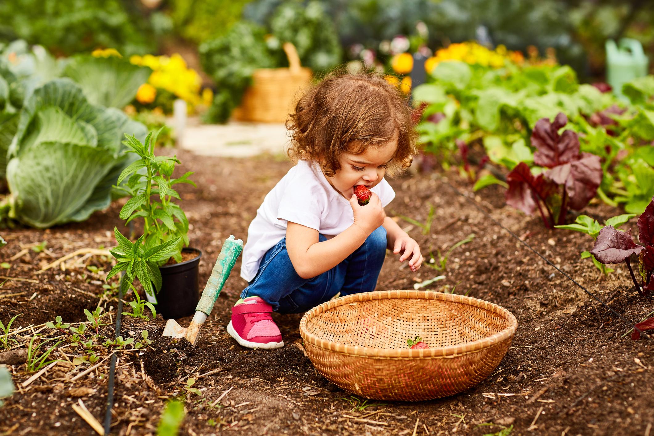 kideatingstrawberries.jpg