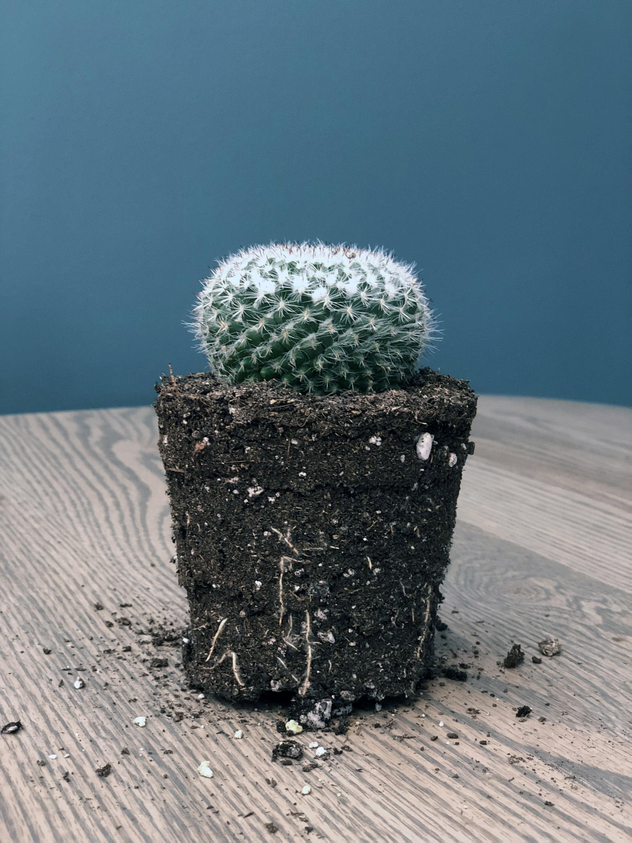 cactus3_edit - Copy.jpg