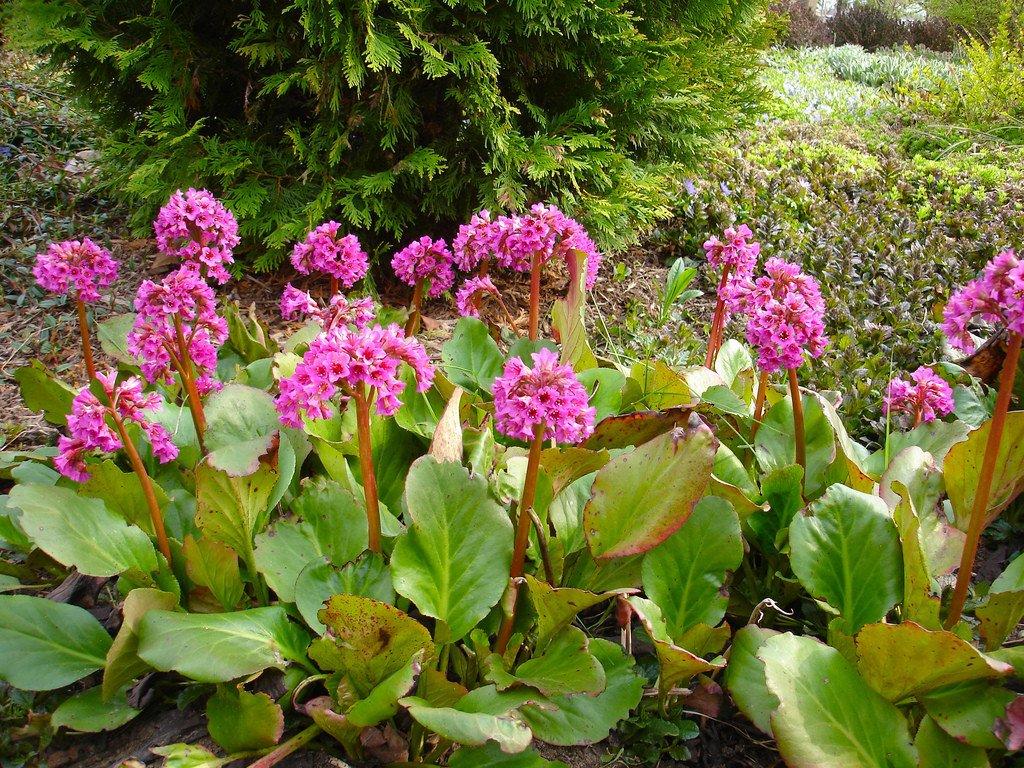 photo: secret gardening club