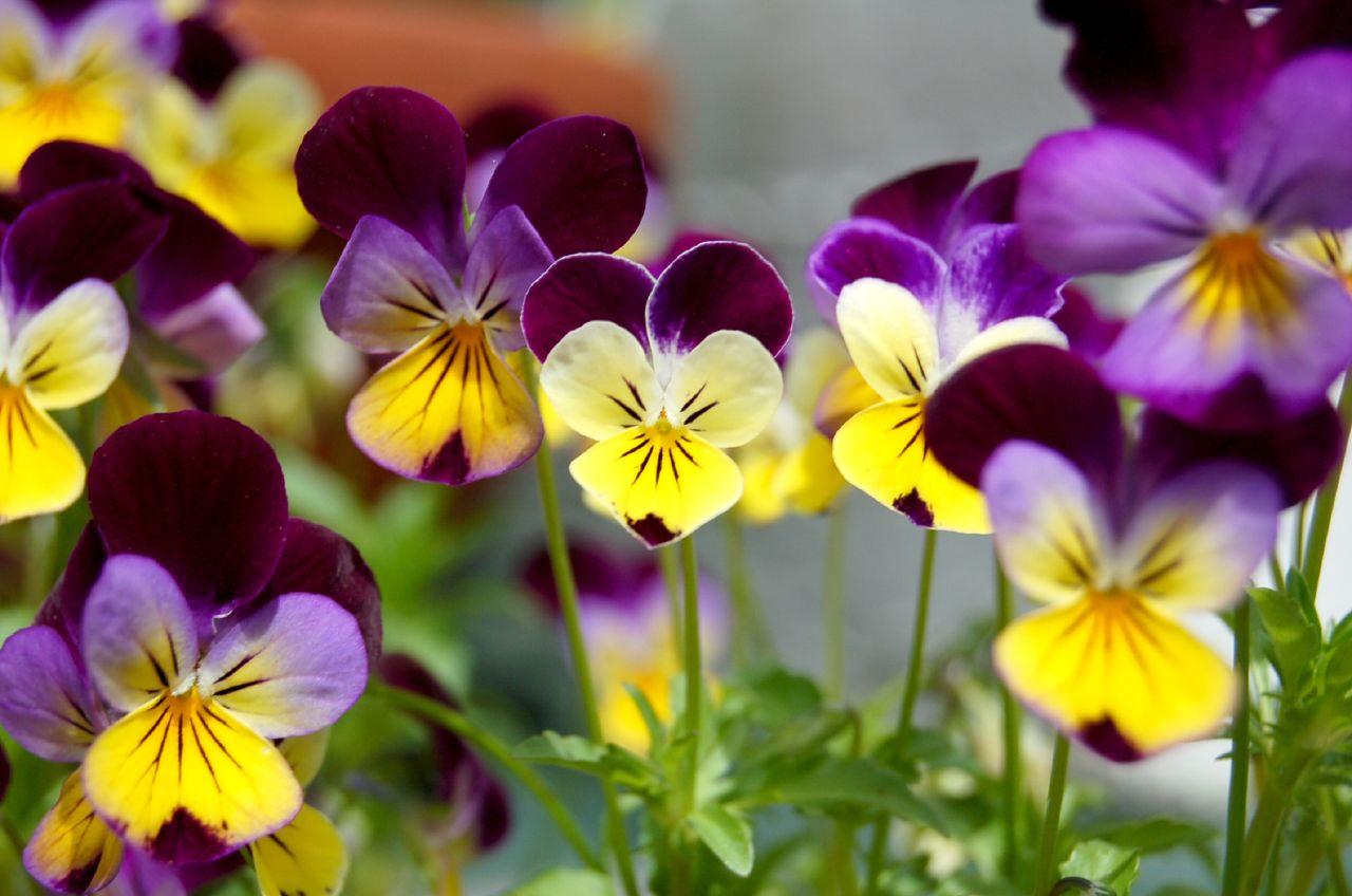 photo: gardening know how