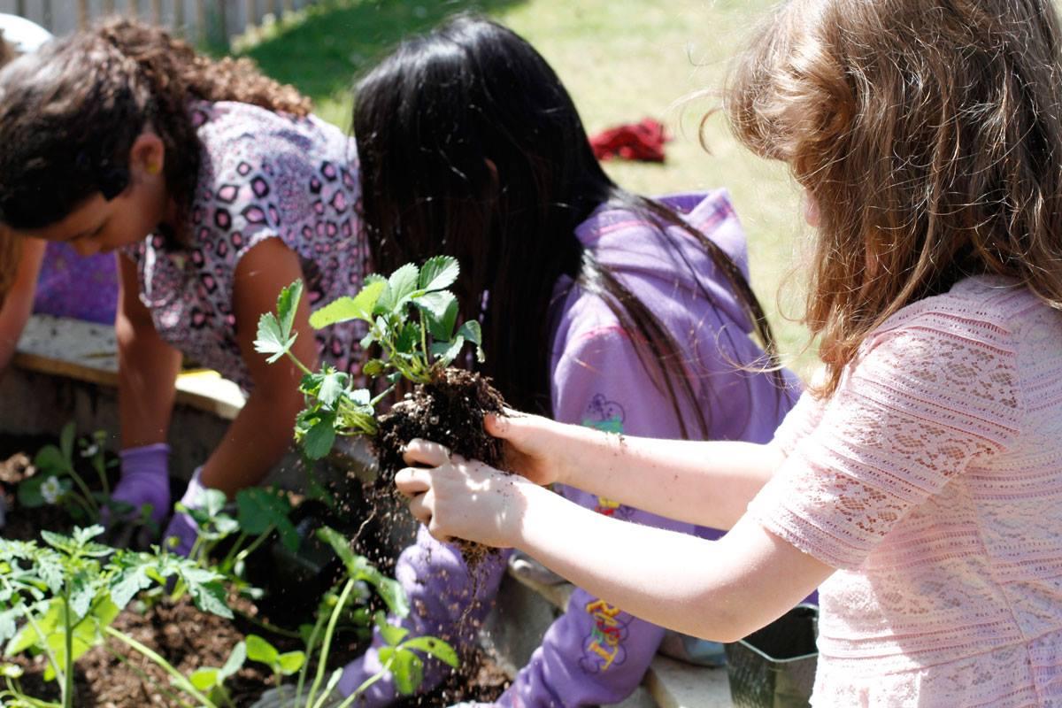 planting strawberries.jpg