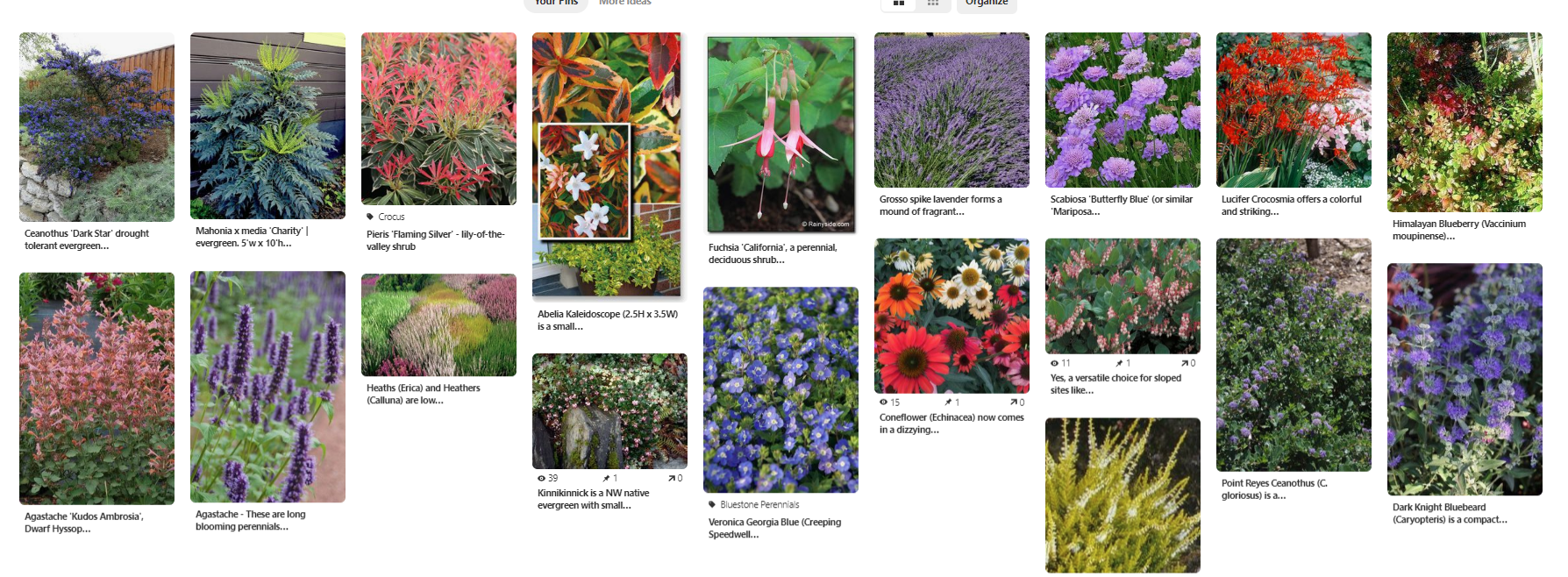 Pinterest Inspiration Board for Rebecca's Pollinator Garden